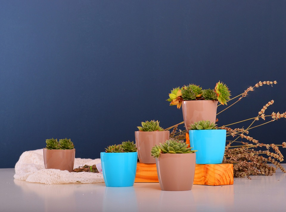 Small brown and blue plant pots